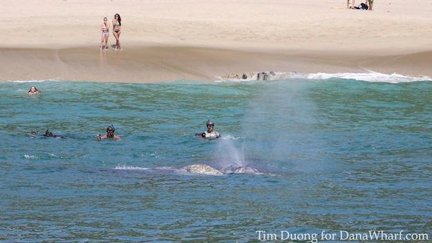 Laguna Beach Whales
